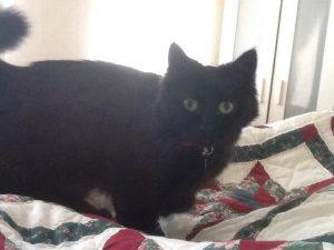 Cat Sitting in Cheltenham