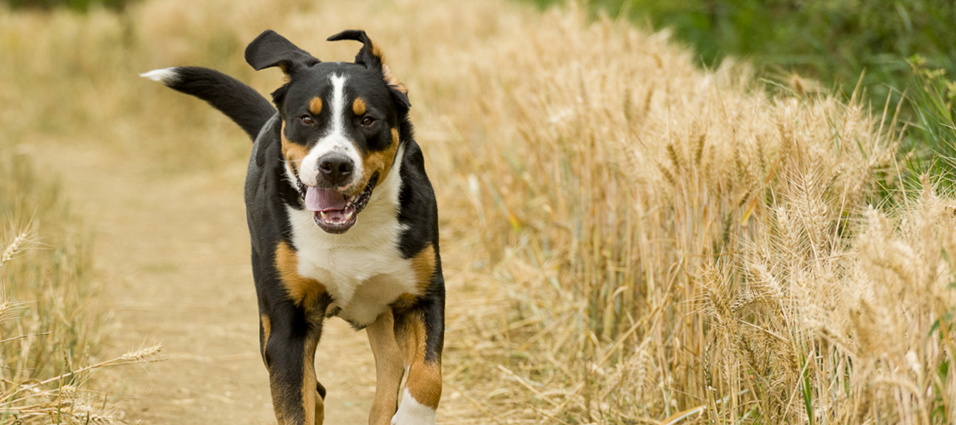 One-to-one dog training and rehabilitation walks