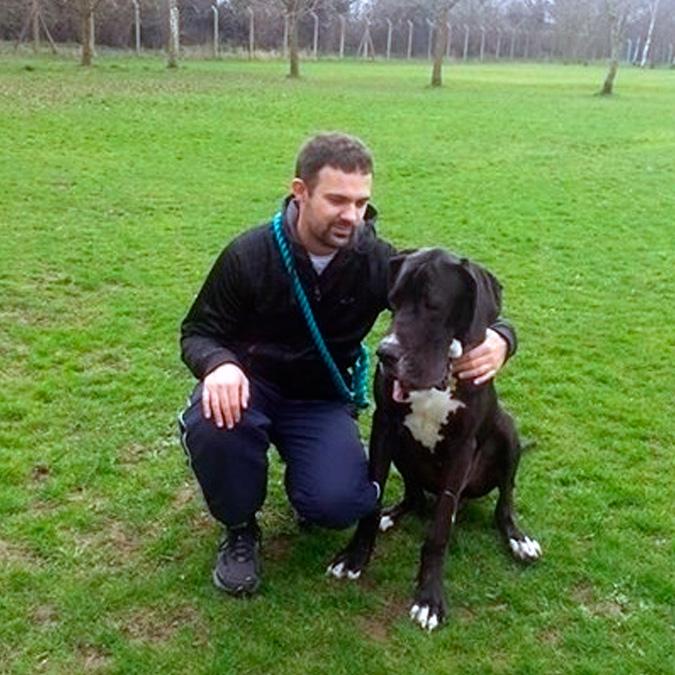 Cheltenham Dog Walking Jobs