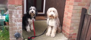 Dog Training with Social Paws in Cheltenham