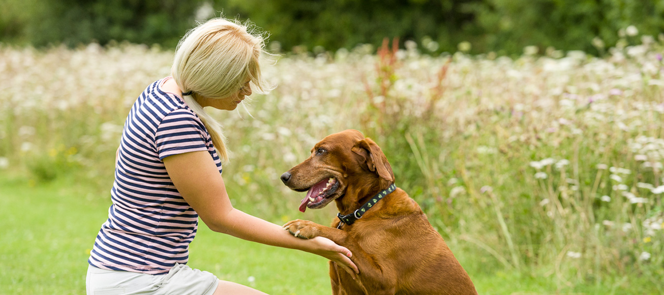 Dog training and pet behaviour