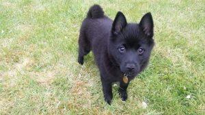 Puppy training and sitting in Cheltenham