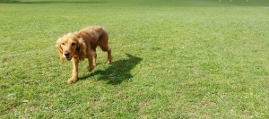 One to One Dog Walking