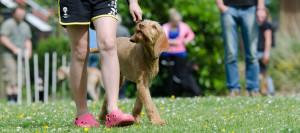Dog Training & Pet Behaviour