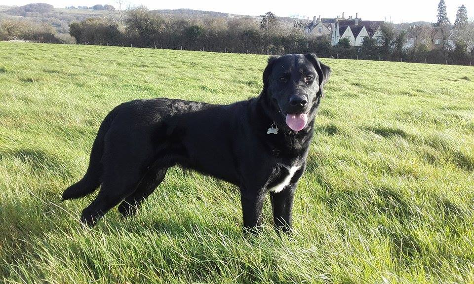 Cheltenham dog training