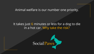 pet welfare